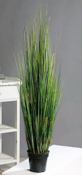 Deko-Carex-Gras im Topf