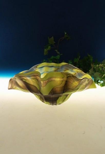 Muschelschale Rainforest