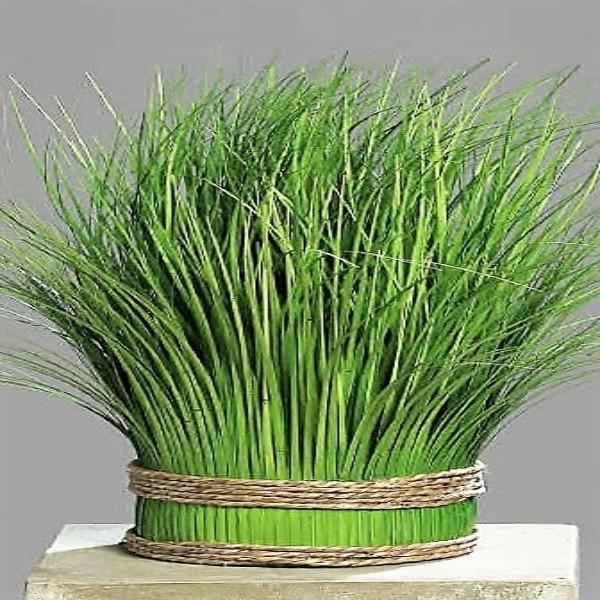 Deko-Gras-Arrangement