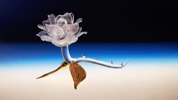Rose mit Goldblättern